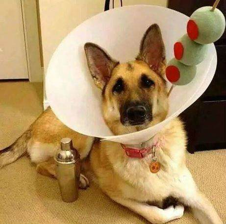 Image credits: http://memecollection.net/12-of-the-best-dog-halloween-costumes-of-2014/