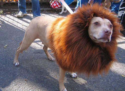 Image credit: Image credits: http://daddu.net/pets-on-parade-dogs-and-cats-in-halloween-costumes/