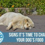 Signs It's Time to Change Your Dog's Food