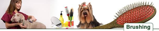 Dog Grooming 101 - Brushing