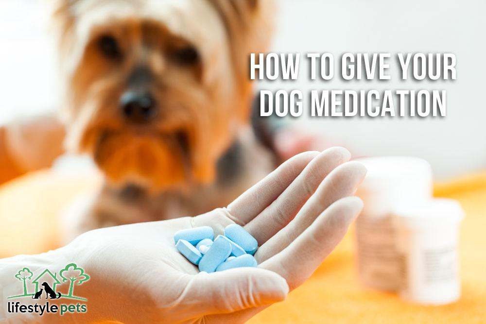How to Give Your Dog Medication