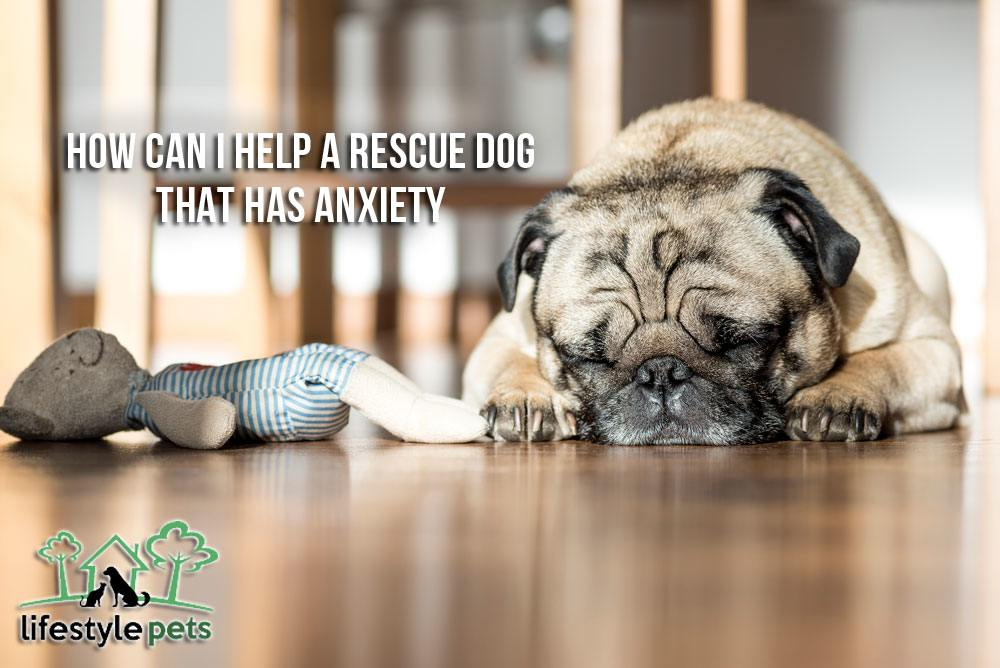How Can I Help A Rescue Dog That Has Anxiety