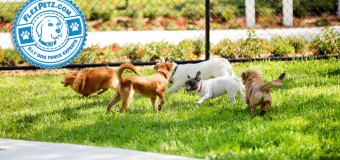 The Behavior of Dogs