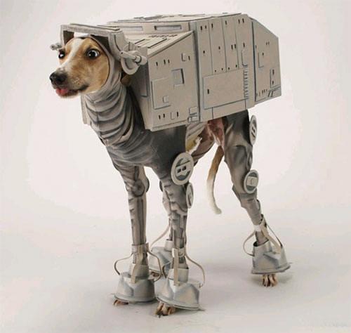 dogs-star-wars