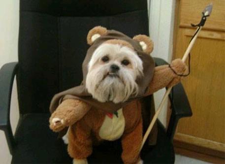 ewok-dog-costume