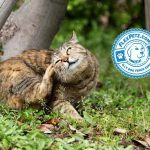 Causes of Itching and Scratching in Pets