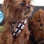 Paw Wars: Dogs Dressed as Your Favorite Characters From a Galaxy Far, Far Away