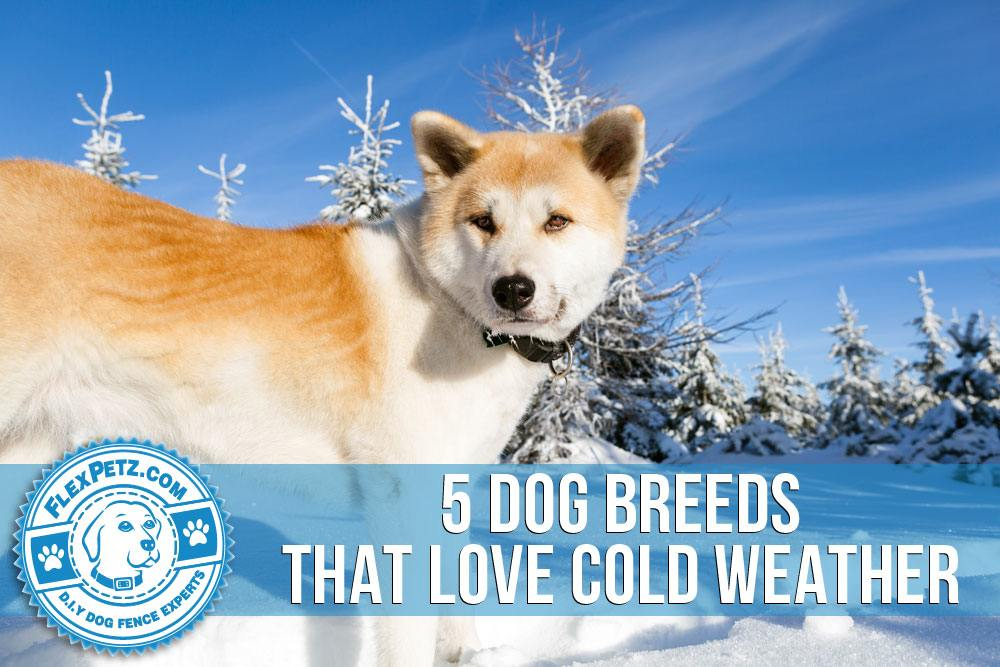 5 Dog Breeds That Love Cold Weather