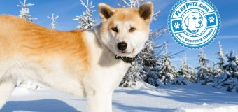 5 Dog Breeds That Love Cold Winter Weather