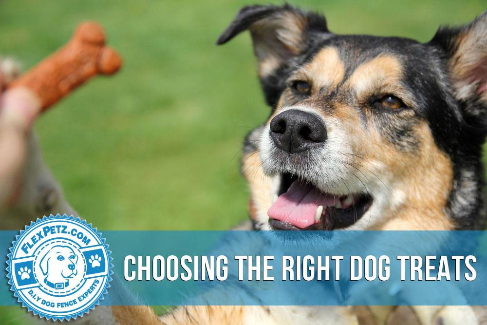 Choosing the Right Dog Treats