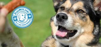 Choosing the Right Dog Treats