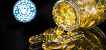 Omega Fatty Acids for Dogs