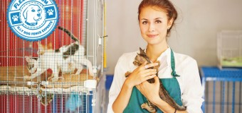 Checklist to Get Ready for a New Cat