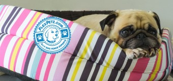 Choosing the Perfect Dog Bed