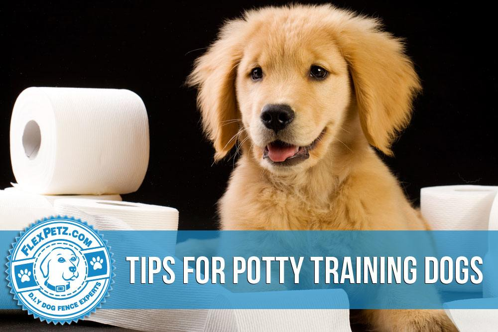 Tips for Potty Training Dogs