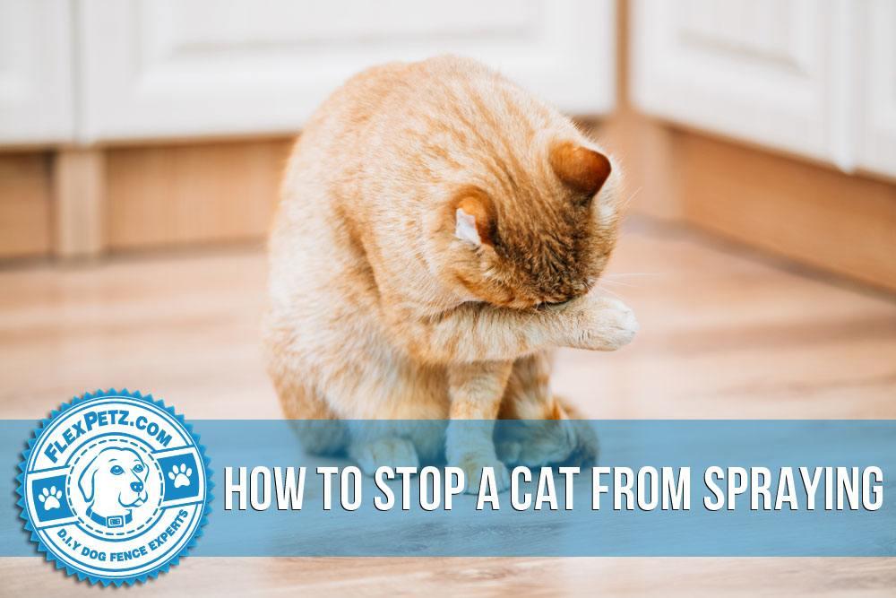 cat bite abscesses