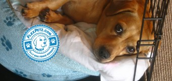 Handling Dog Emergencies