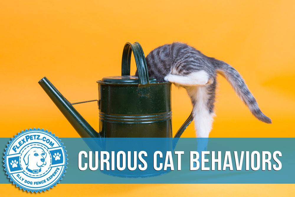Curious Cat Behaviors