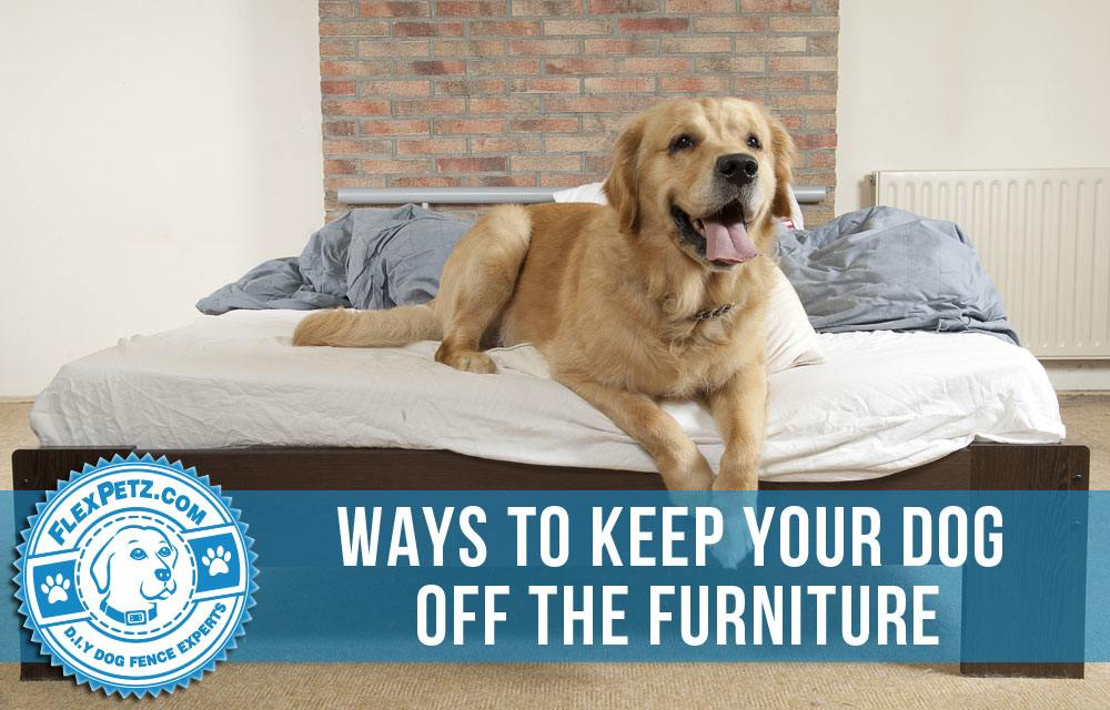 Ways To Keep Your Dog Off The Furniture