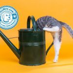 Curious Cat Behaviors