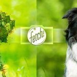 Microsoft's New Fetch! App Is a Hit With Dog Lovers