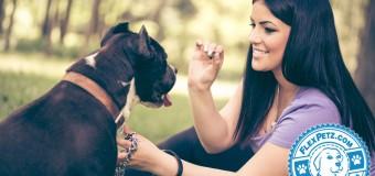 10 Common Dog Training Mistakes