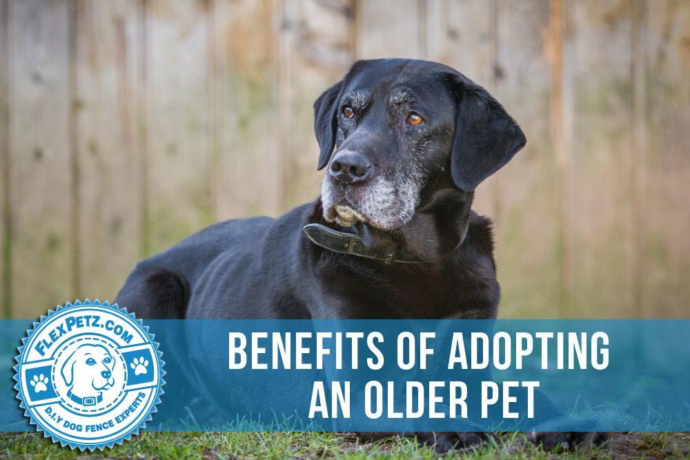 Benefits of Adopting An Older Pet