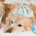 Dog Flu Virus Takes Hold in the United States
