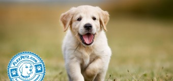 The Most Popular Puppy Names of 2015