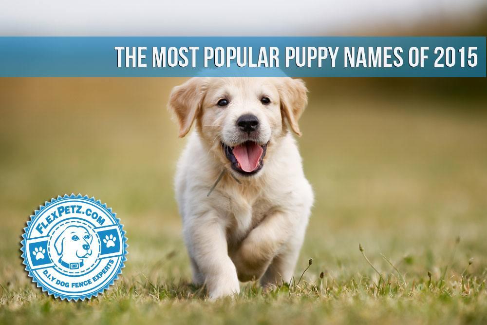 puppyname2