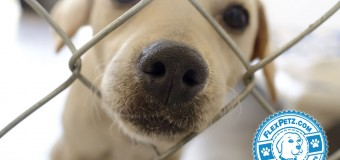 5 Quick Temperament Tests for Choosing a Shelter Dog