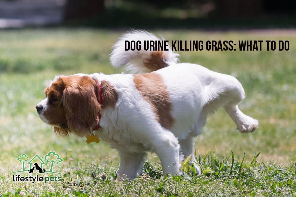 dogurinekillinggrass