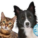 Pet Insurance: A Brief Comparison