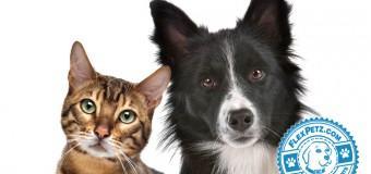 Pet Insurance: A Brief Comparison