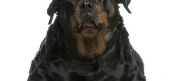 Help for Obese Dogs