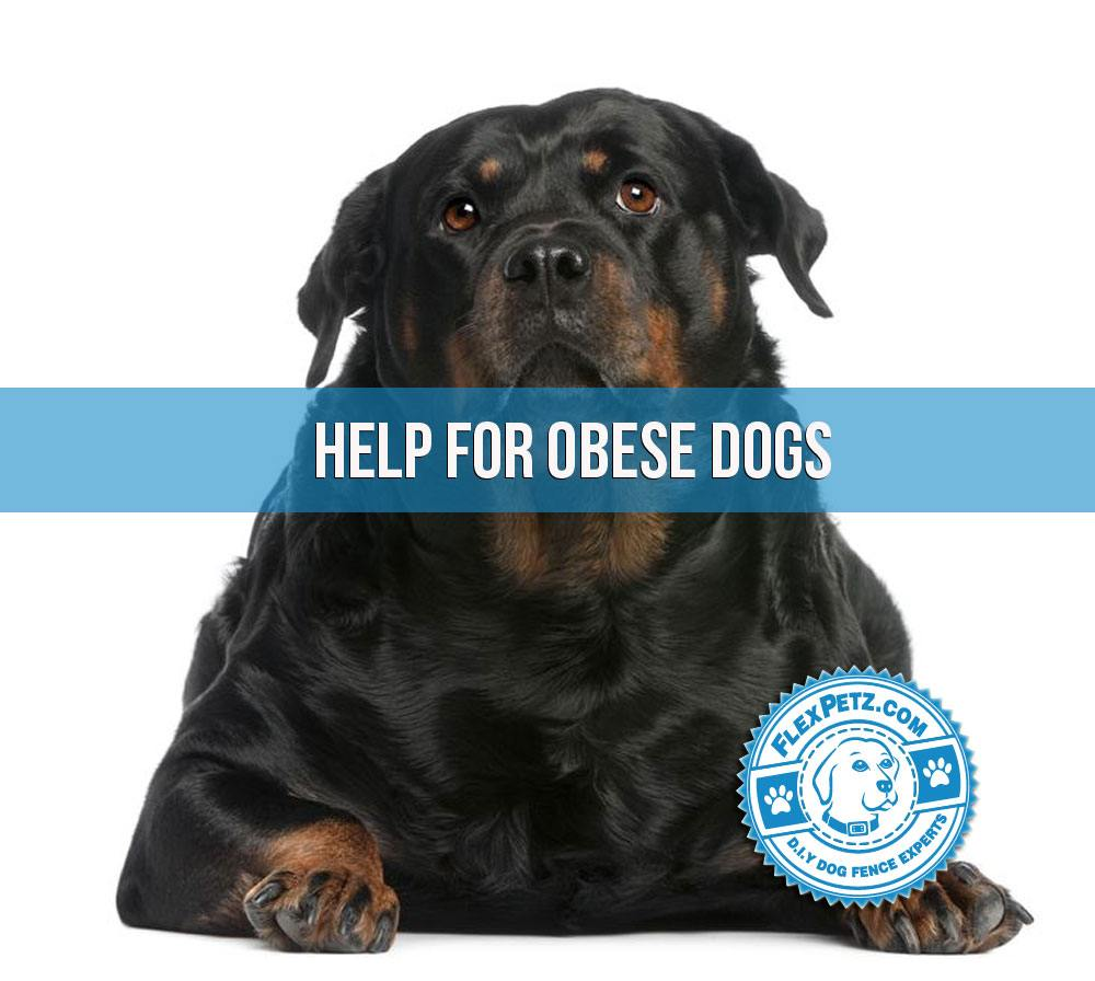 Help For An Obese Dog