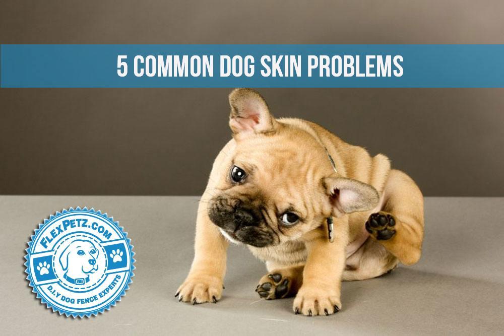 dogskinproblems2