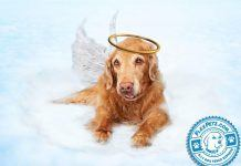 Dog above the clouds, with wings and a golden halo on the head