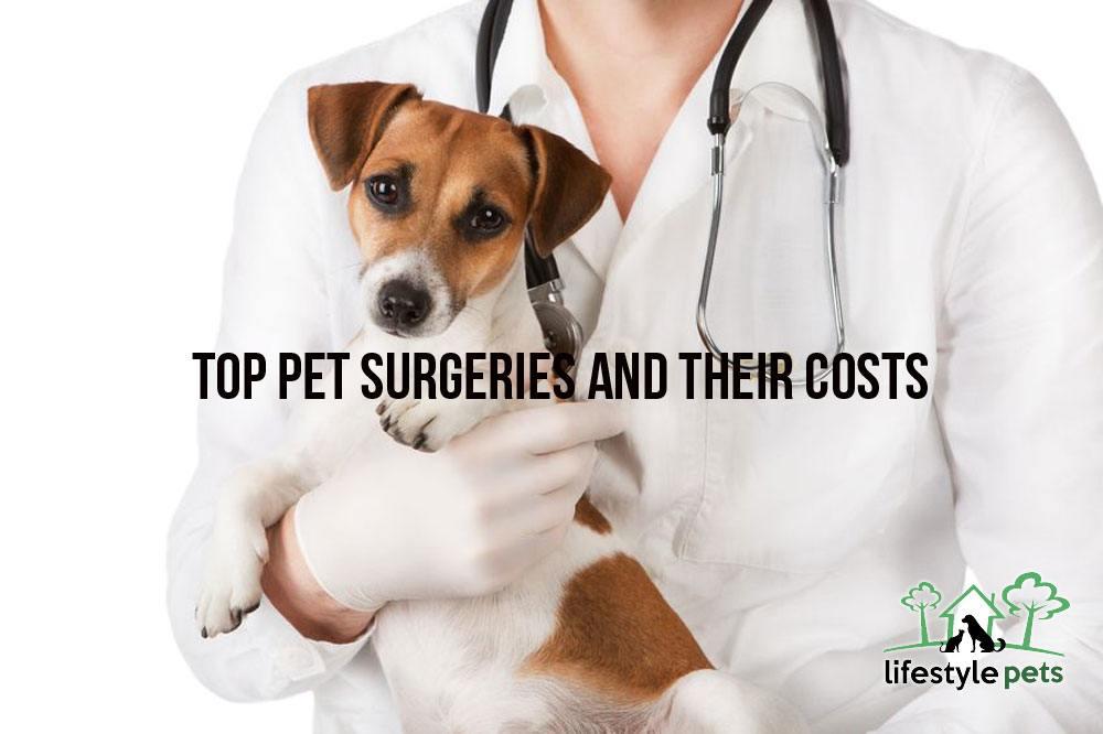 pets surgery