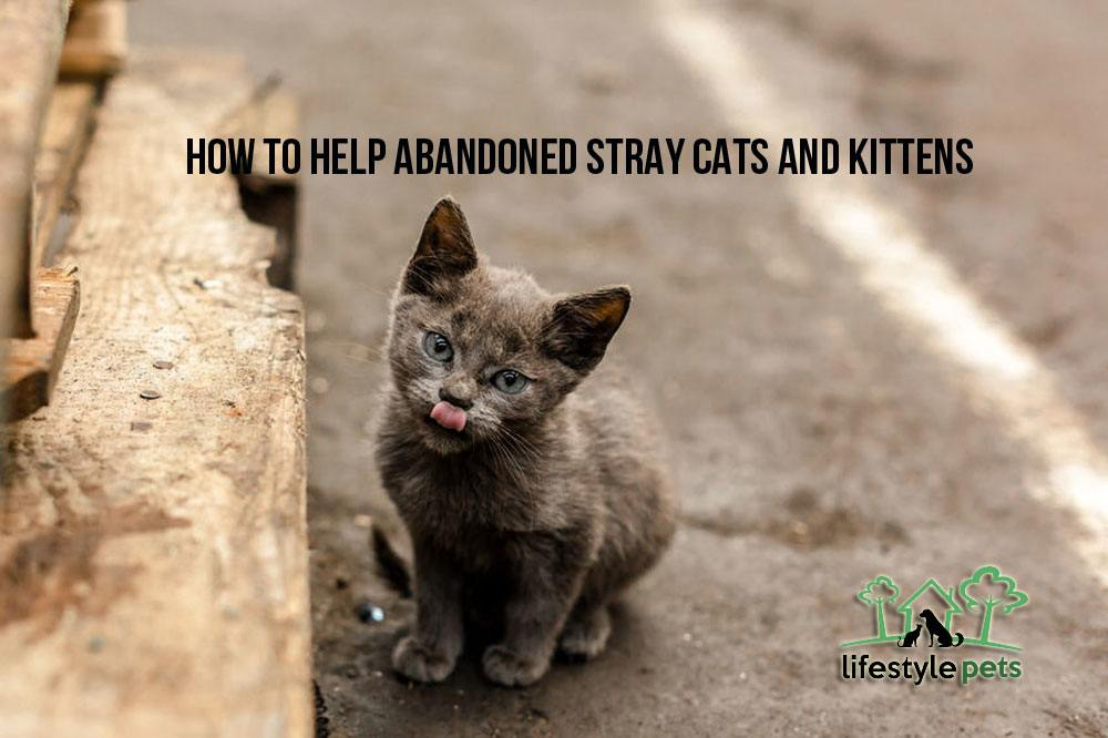 pictures How to Care for a Stray Kitten
