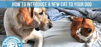 How to Introduce a New Cat to Your Dog