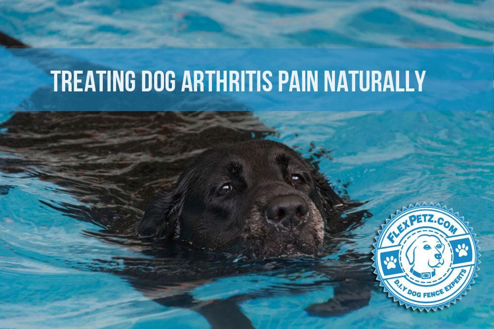 dogarthritis2