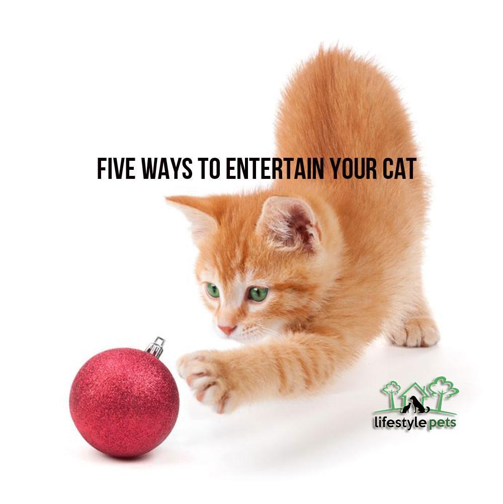 entertaincat