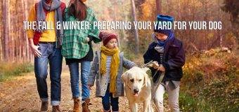 The Fall & Winter: Preparing Your Yard for Your Dog