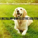 Can I Install My Own Electric Dog Fence?