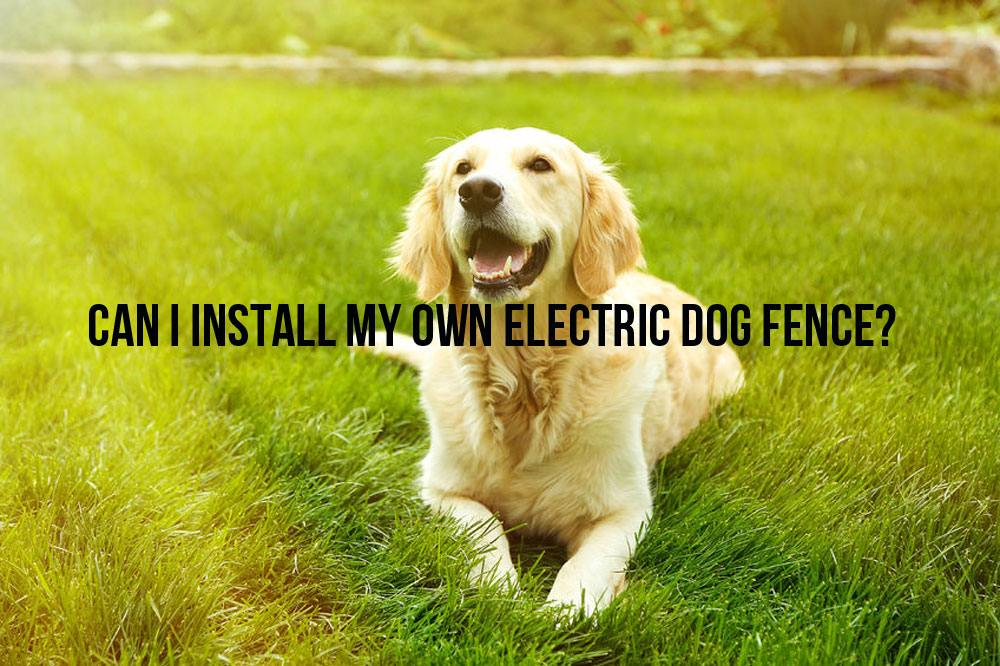 Can I Install My Own Electric Dog Fence