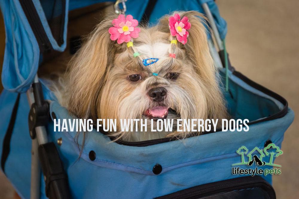 lowenergydogs