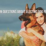 Common Questions About Electric Dog Fences