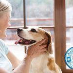Salient Tips for Dog Training