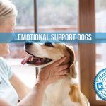 5 Ways Your Pet can Improve Your General Well-Being